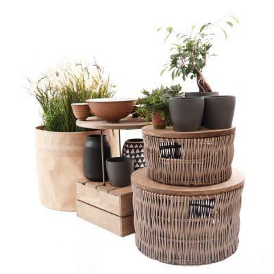 Dump-bins-500mm-house-plants-5