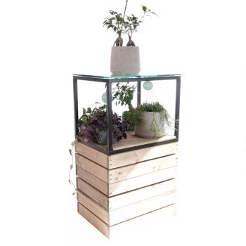 Raised-Plinth-640mm-with-Cube-displaying-House-Plants