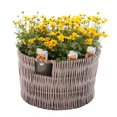 Round-Wicker-Basket-Large-with-plants